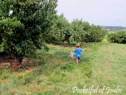 Picking peaches - the hills are alive