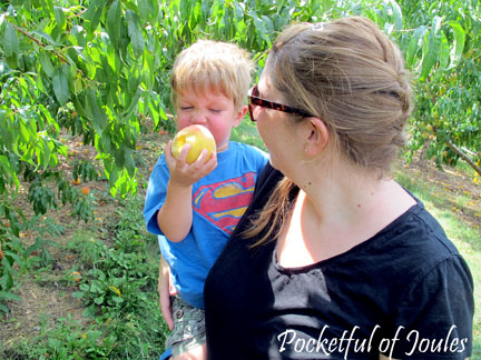 Picking peaches - the sniff test