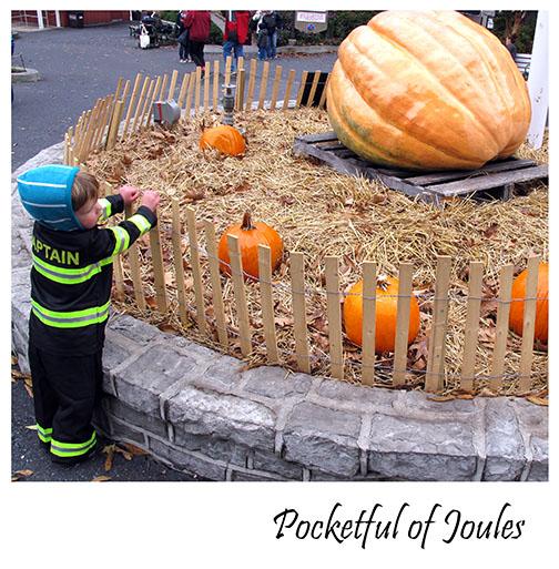Joules - Great pumpkin