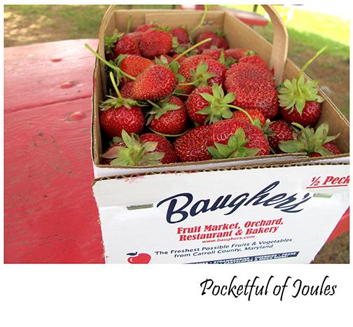 Strawberry picking 6